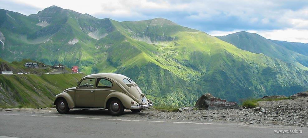 Povestea Splituletului – bunica broscutelor din Romania